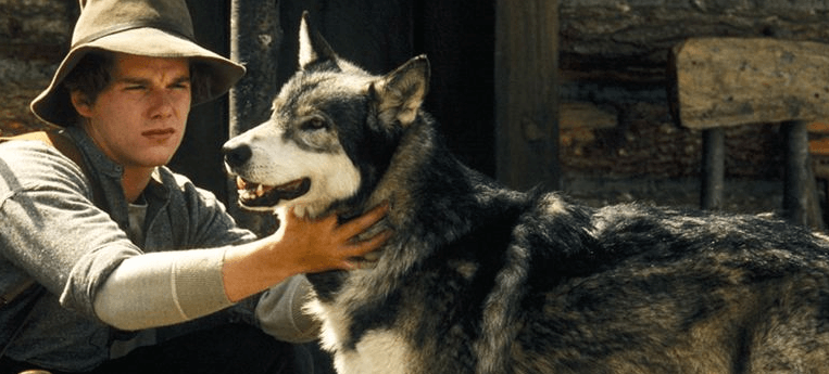 Caninos Brancos, do filme da Disney