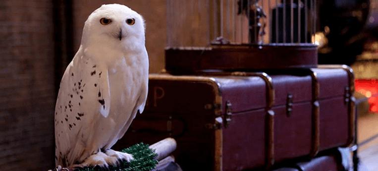 Edwiges, a coruja carteiro de Harry Potter